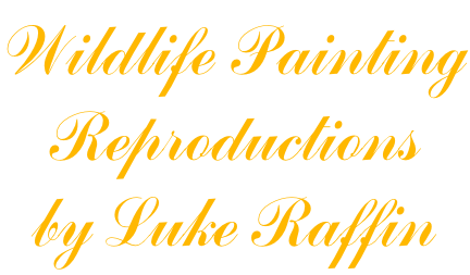 Wildlife Painting Reproductions by Luke Raffin